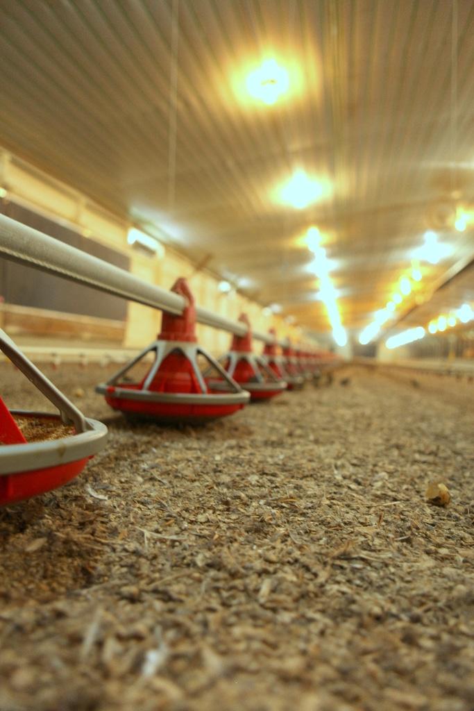 quail feeders on the ground