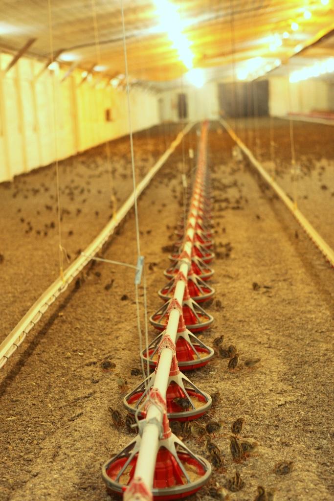 quail feeders indoors